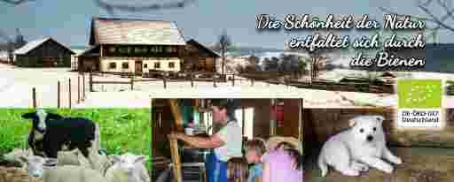 Kundenumfrage: Der historische Bienenhof, Öko-Lämmer auf der Weide, Kinder schauen beim Honigentdeckeln und Schleudern zu, Hofhund Deutscher Mittelspitz, EU-Bio-Logo (Sternenbanner).