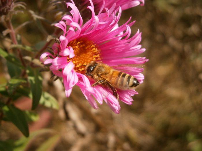 Blütenuhr.