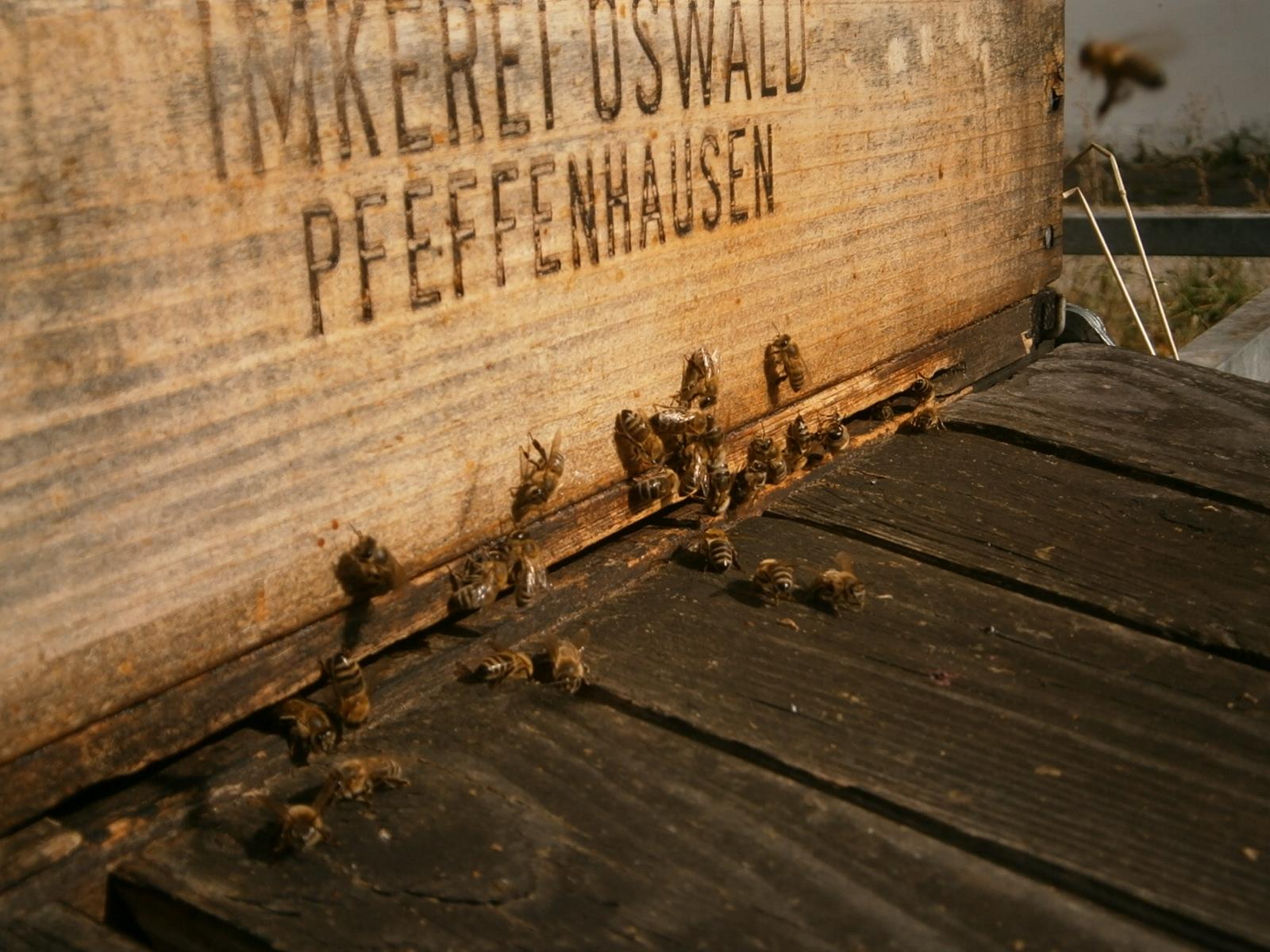 Bienen bei der Sonnung.