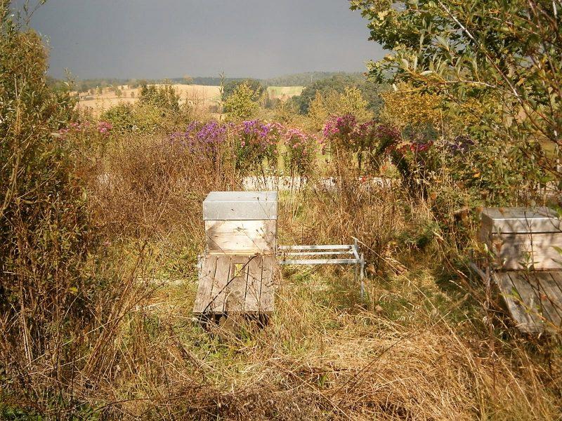 Bienengerechte Bienenhaltung in Einzelaufstellung.