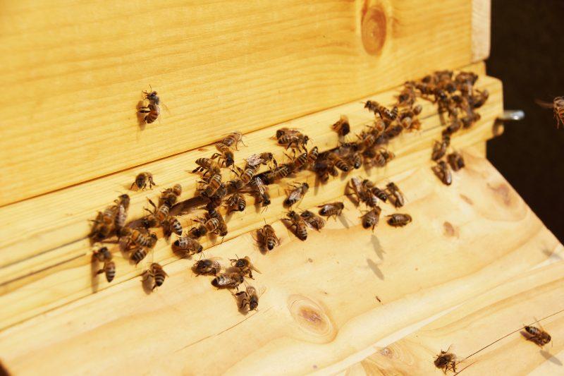 Bienen im Spätherbst beim Ausflug.