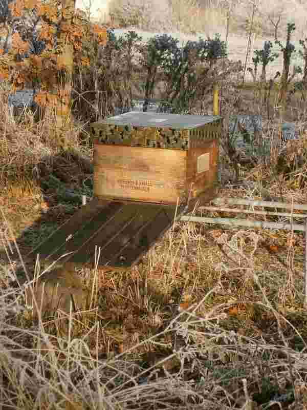 Ein Bienenvolk von Imkerei Oswald mit langem Anflugbrett und tarnfarbenem Überwurfdeckel.