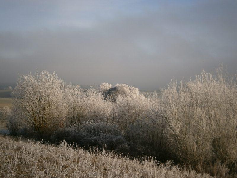 Bienen im Winter: Landschaft zwischen Unterlauterbach und Oberlauterbach bei Rottenburg an der Laaber bzw. Pfeffenhausen. Raureif auf Sträuchern und Bäumen.