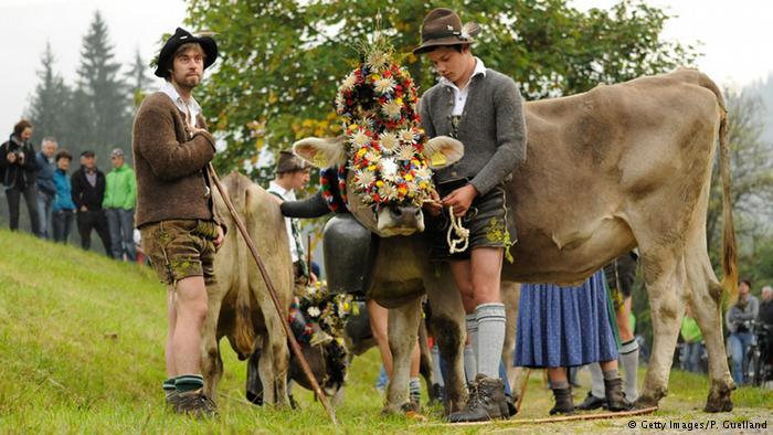 Zwei bayerische Almbauern mit Ihrem geschmückten Kühen.