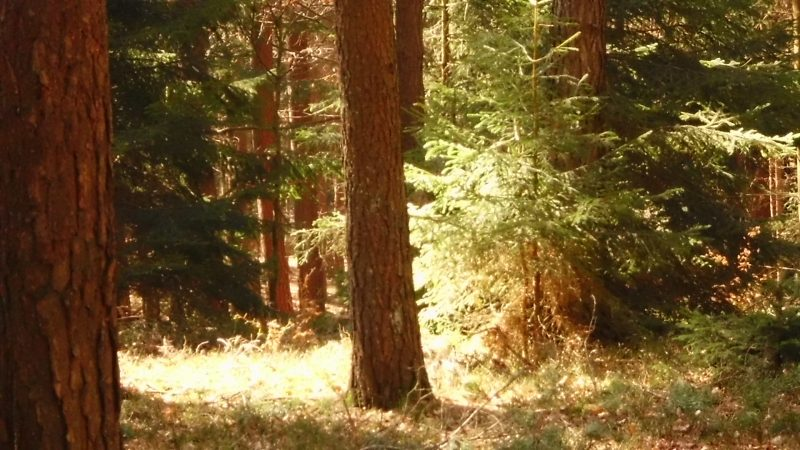 Wald im Frühling.