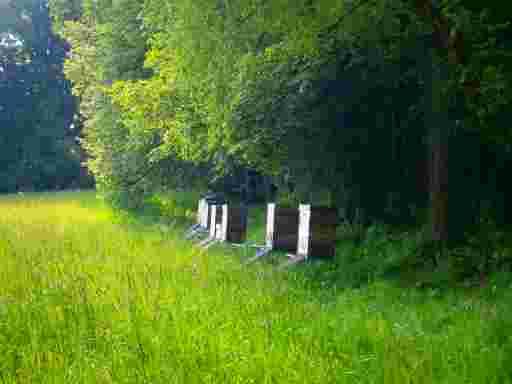 Bienenkästen am Waldrand.