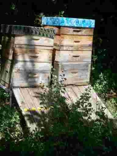 Waldhonig von Bienenstöcken im Wald.