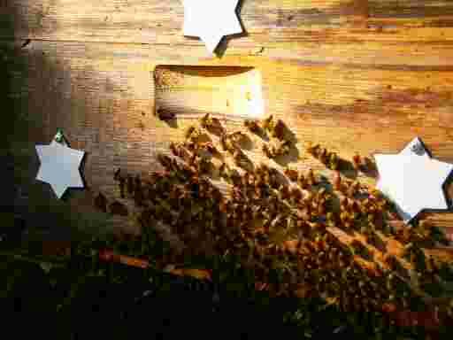 bienen sitzen vor dem Flugloch, um die Zeit der Ernte von Propolis cera, auch Kittharz oder Bienenkittharz genannt.