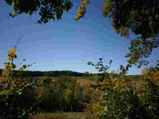Das weltbekannte Hopfenanbaugebiet der Hallertau.