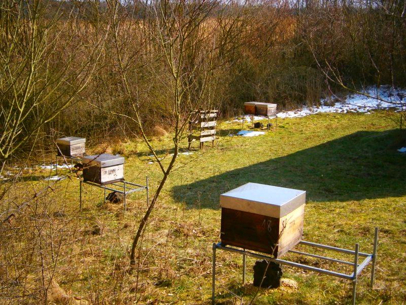 Einelne Bienenvölker stehen in einem Garten verteilt.