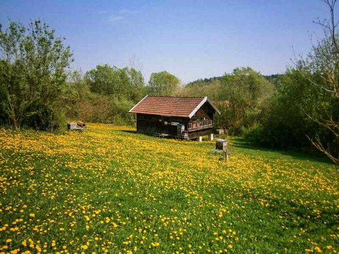 Bienenhaus im Grünen
