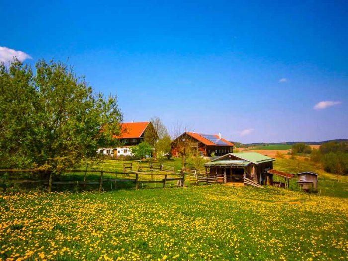 Blühende Löwenzahn-Wiese und Bauernhof in Bayern.