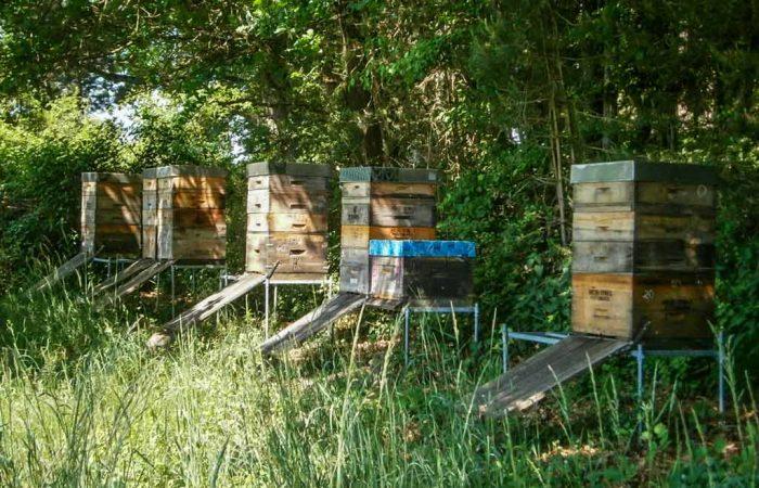 Bienenstöcke am Waldrand von Imker Oswald