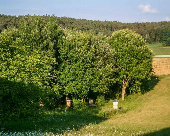 Bienenparadies mit blauem Himmel und kleinen weißen Wolken