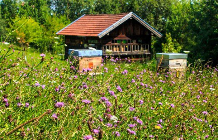 Altes Bienenhaus mit Bienen und Blumenwiesen.