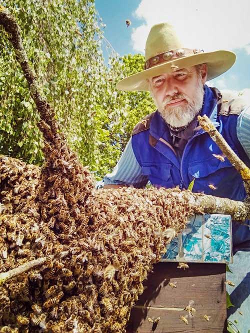 Ein Imker bei der Bienen-Beobachtung.