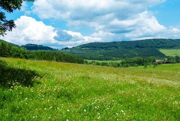 Im Vordergrund eine grüne blühende Wiese. Im Hintergrund die grüne Wälder der Schwäbische Alb.