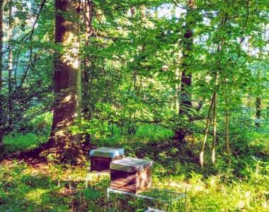 Bienen in ihrem natürlichem Habitat, dem Laubwald.
