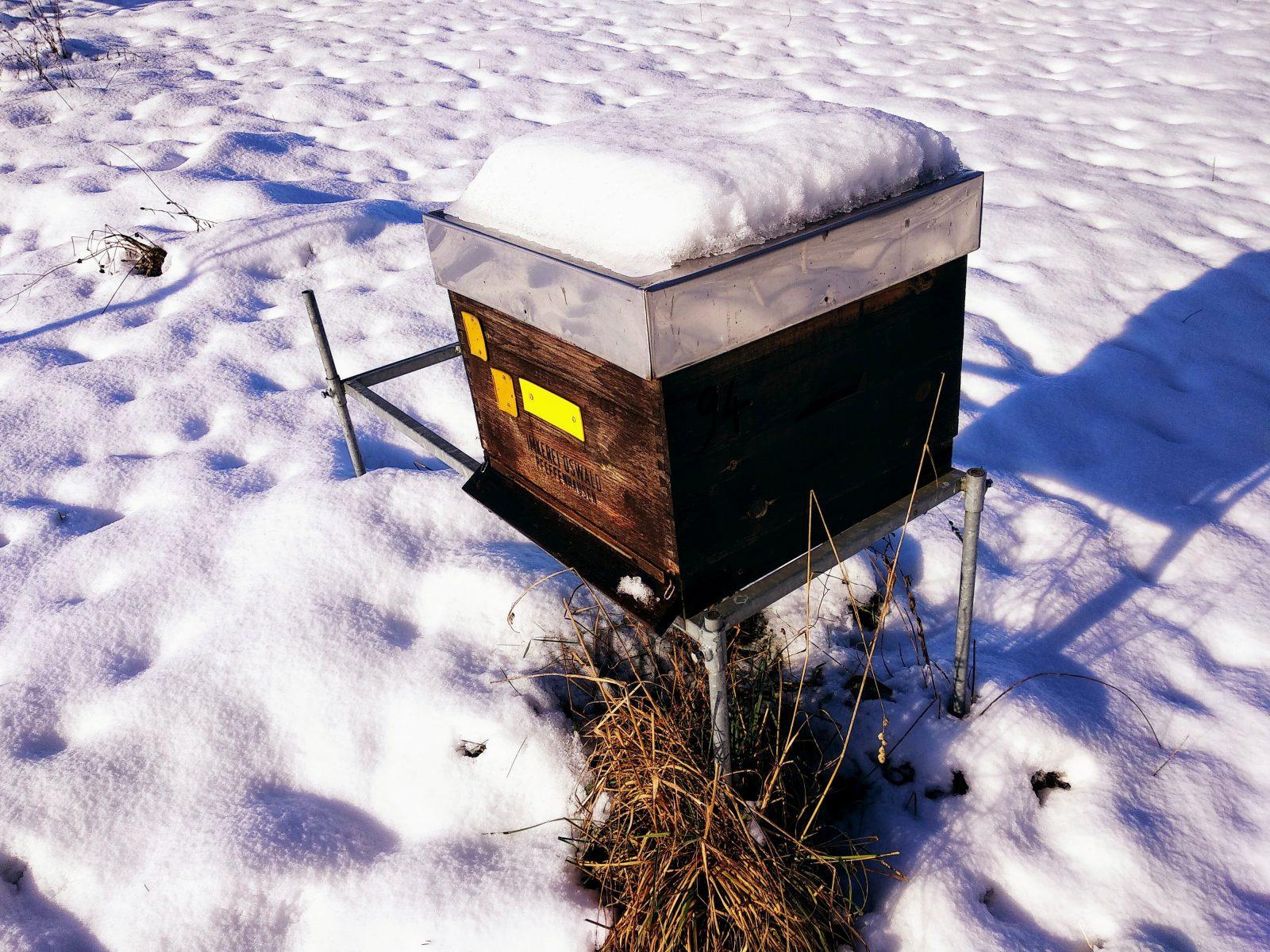 Sonnige Aufstellung der Bienenvölker.