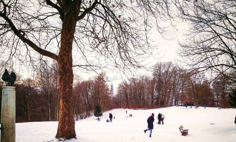 Kinder fahren Schlitten im Hofgarten von Landshut.