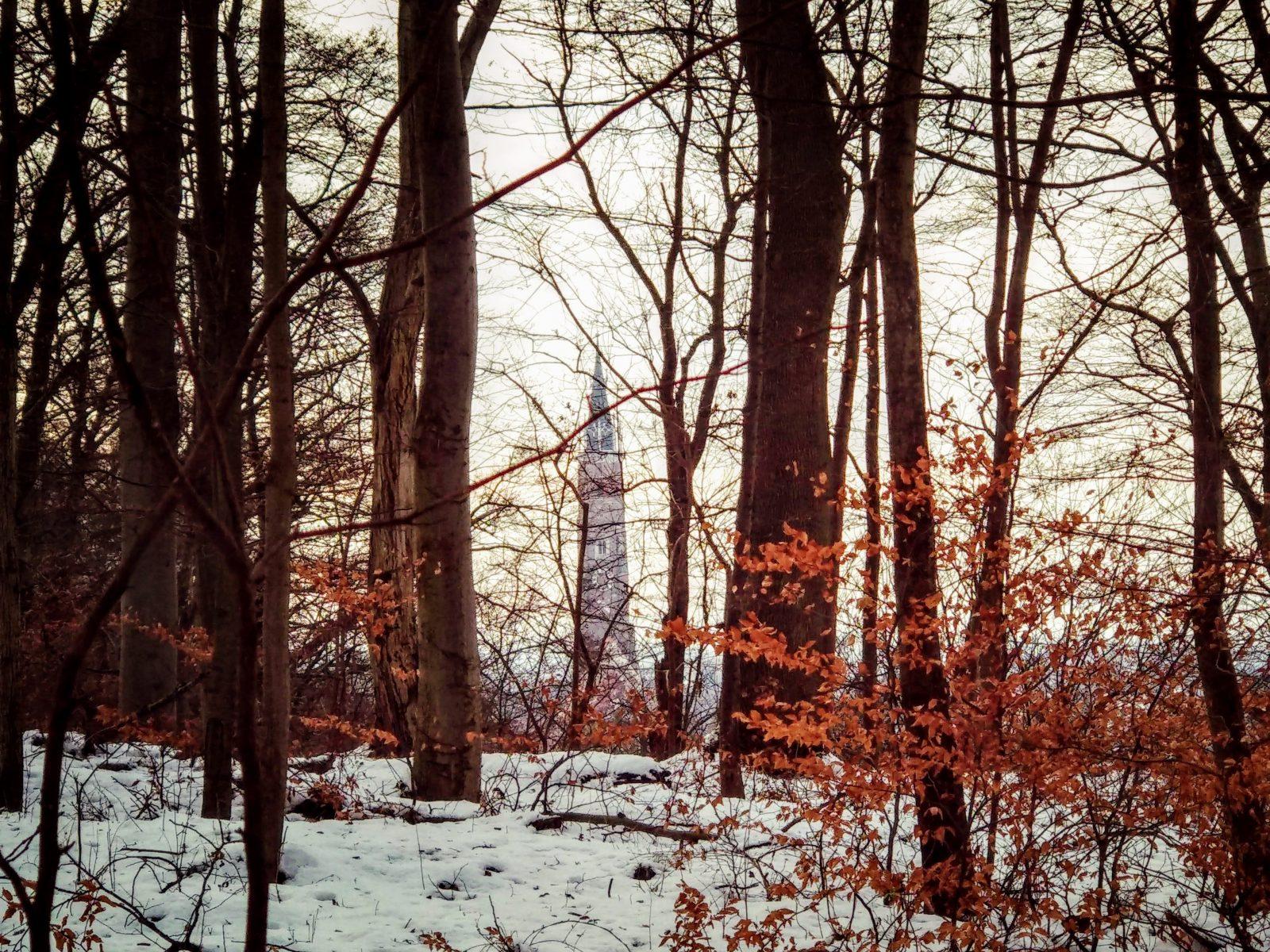 Durch den Wald sieht man den Turm von Sankt Martin.