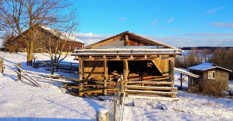Zur Schafhaltung hat Ruth einen sogenannten Offenfrontstall entworfen und realisiert.
