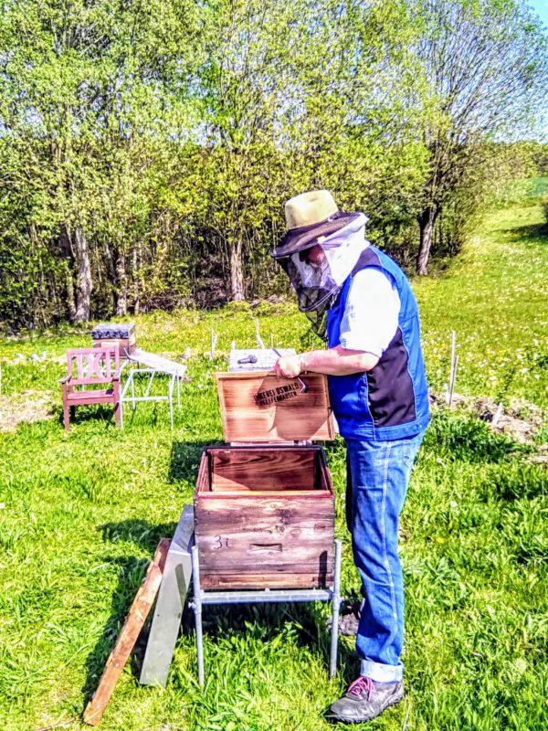 Berufsimker Hans Georg Oswald bei der Vorbereitung von Bienenkästen für die Einlogierung von Bienenvölkern.
